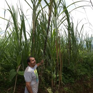 Madre Tierra traditioneller handgemachter Muscovado Zucker 500g