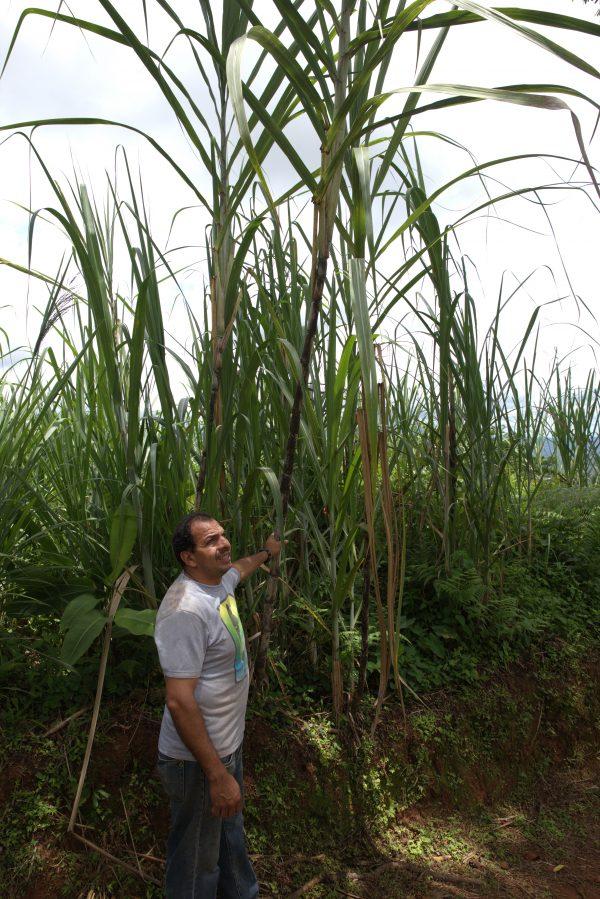 Pablo am Zuckerrohr Madre Tierra