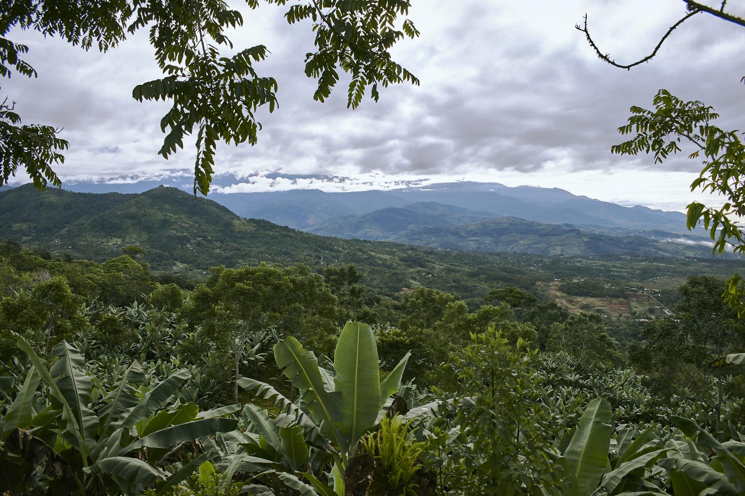 Madre Tierra Plantage im Tal