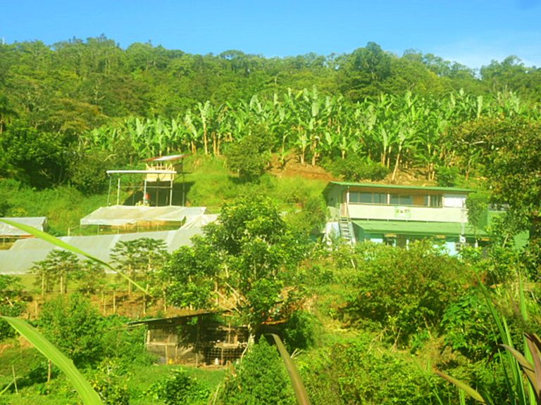 Kaffee Plantage Madre Tierra