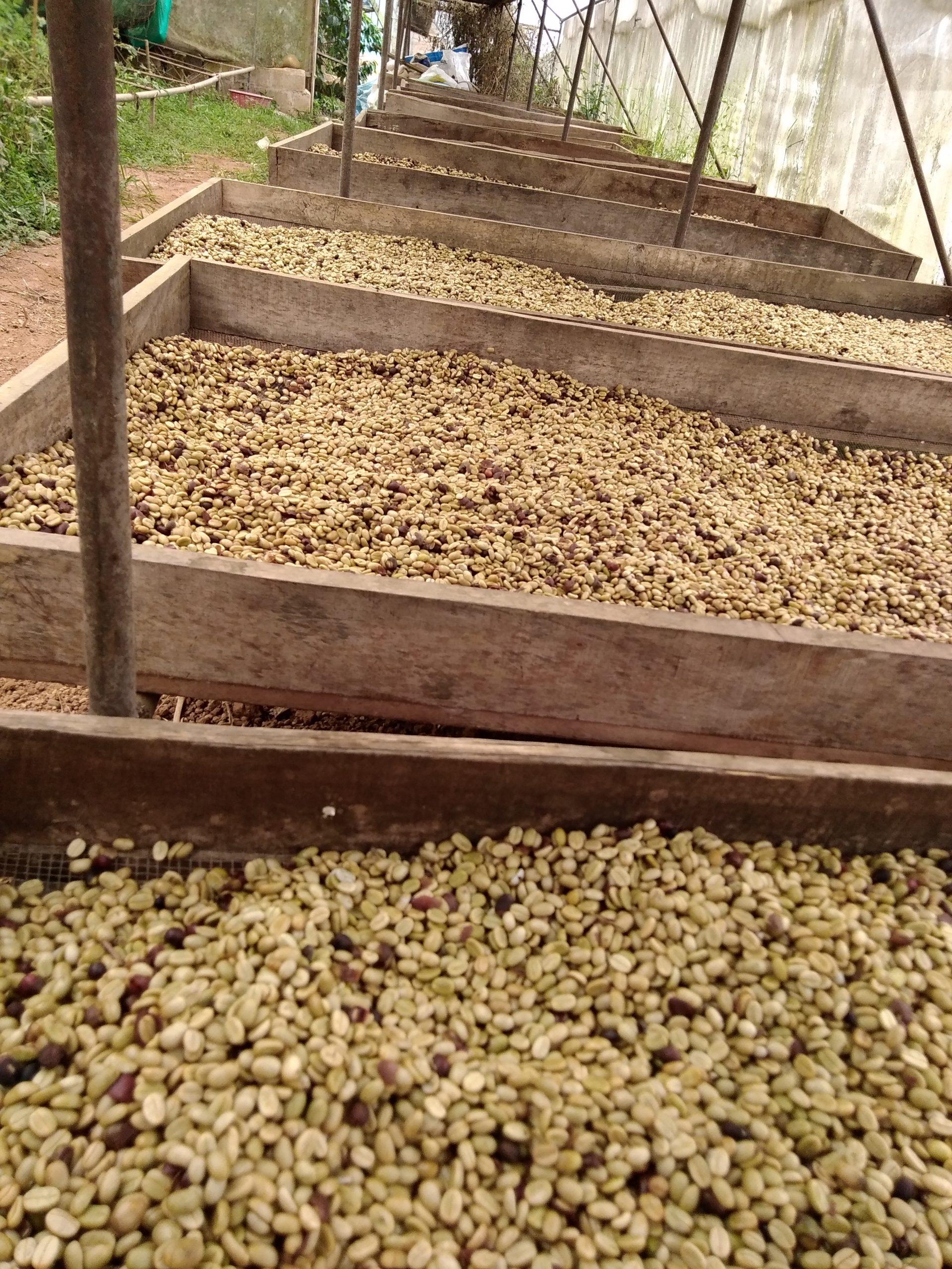 Hochbetten Kaffee Madre Tierra