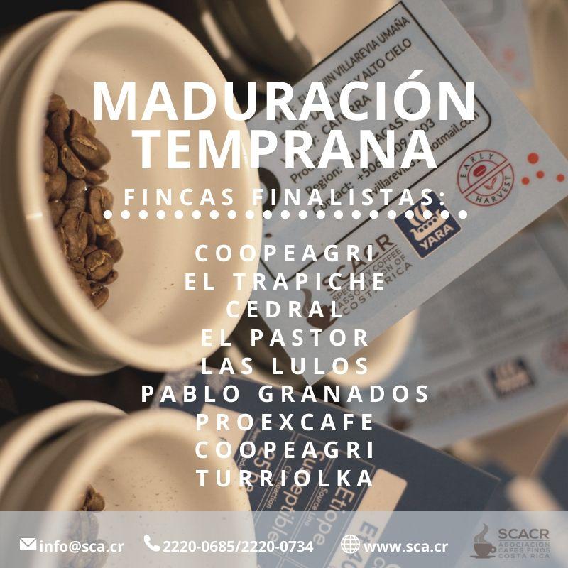 Wettbewerb SCAR_Madre Tierra