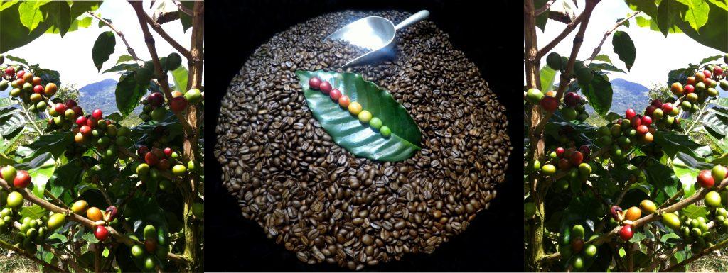 Arabica Hochland Kaffee Costa Rica